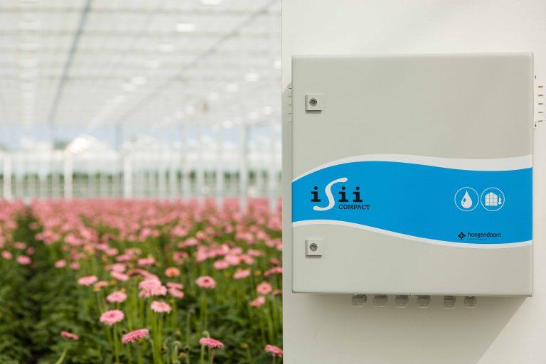 Hoogendoorn_iSii compact_gerbera greenhousekopie